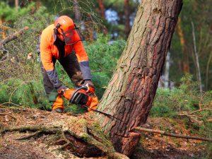 Skogsbrukare